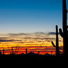 A few more Saguaros at sunset